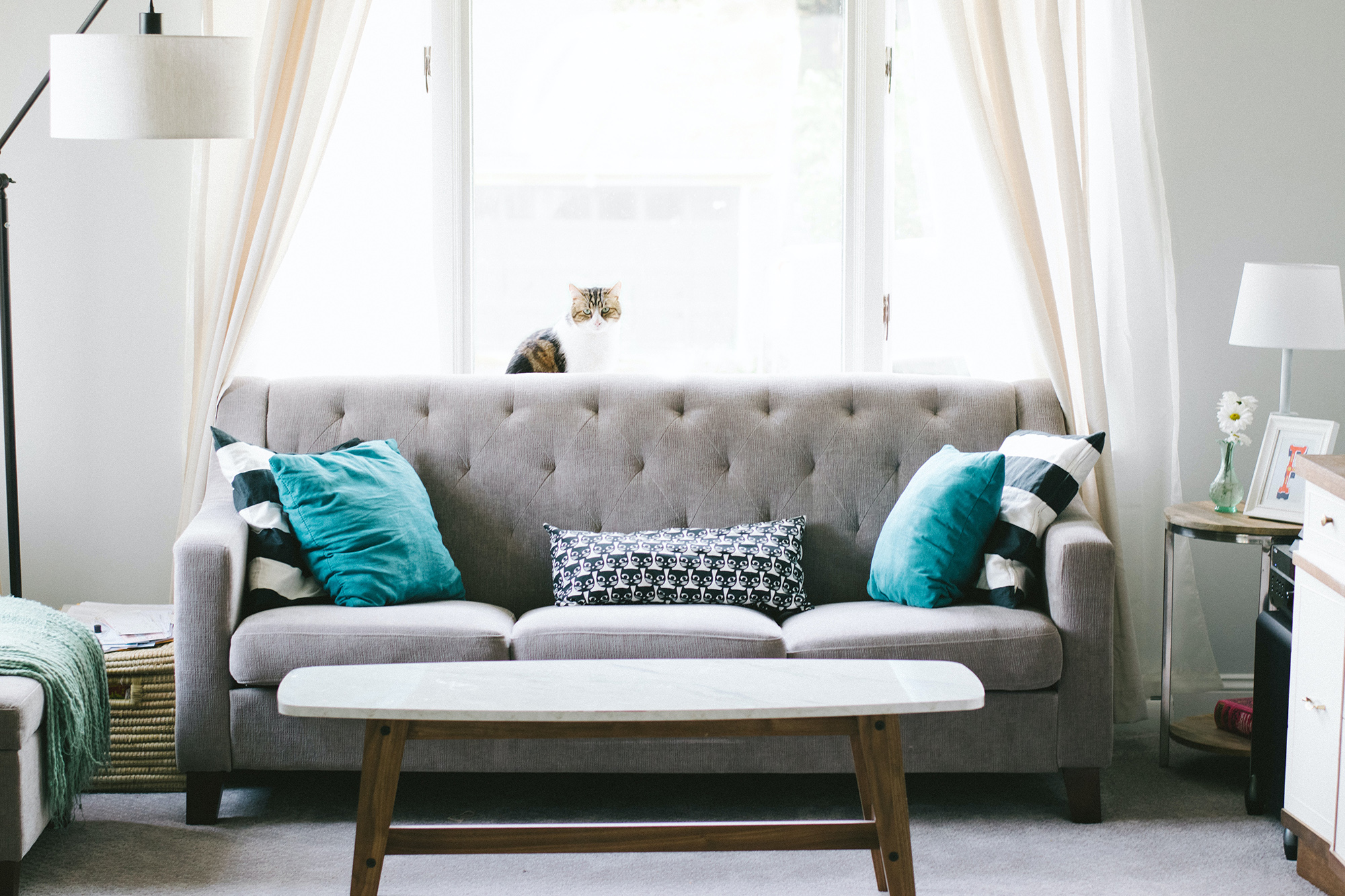 grey sofa with a cat behind it in a tidy house with a